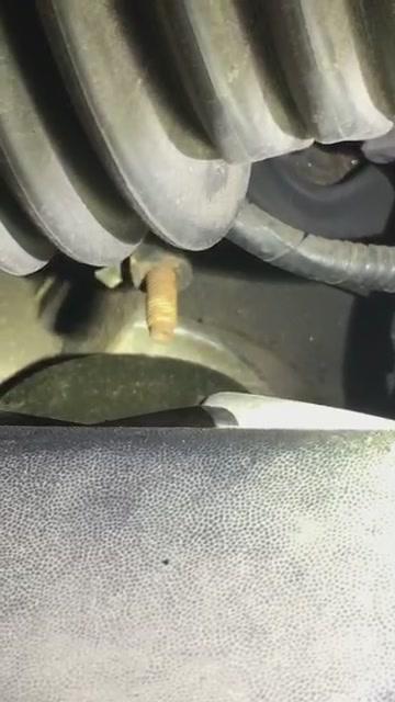 Facebook Live 3/18/19: Rattle snake sound under hood!!!